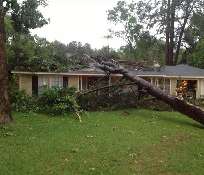 General Did a tree fall on your house in the Foothills?